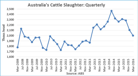 Australian-Cattle-Slaughter